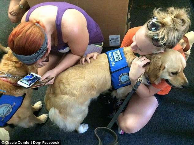 Golden retrievers are commonly recruited for the role, since they tend to be calm and friendly to strangers