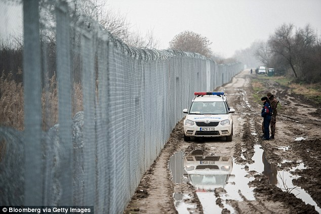 Borders: In an attempt to block migration through his country, Prime Minister Orbán ordered the borders with Serbia and Croatia to be sealed. Pictured, a razor wire fence on the Hungarian-Serbian border