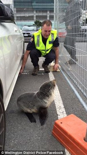 The car owner was taken aback to find police poking a broom under his car