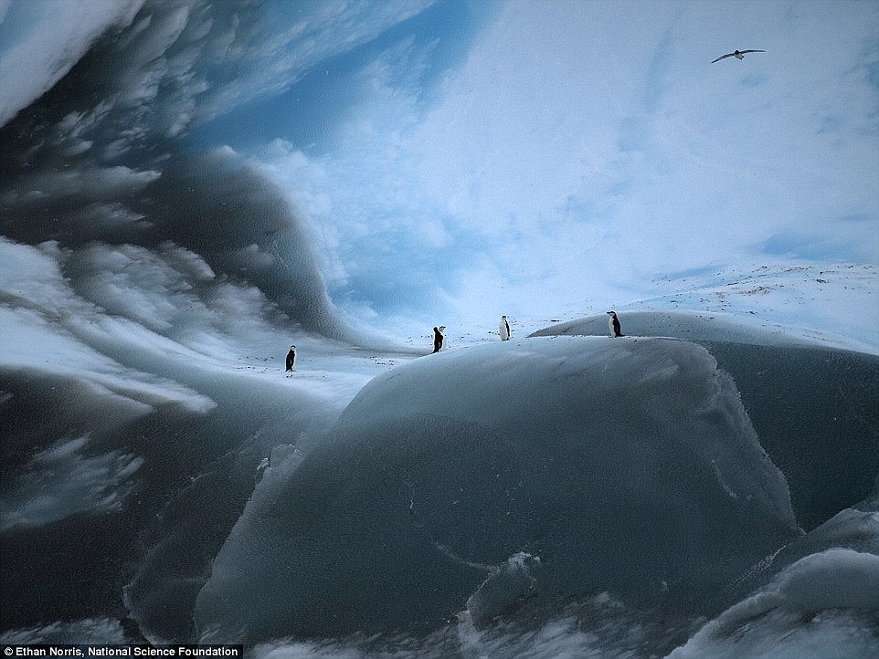 Penguins gather in Antartica's Iceberg Alley, a region of stunningly ancient glaciers located in the western Weddell Sea