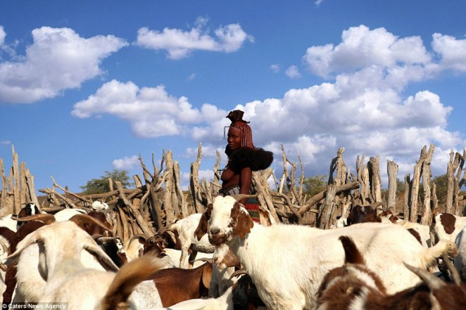 A member of the tribe, which has very strong traditions, pictured herding goats in rural Namibia