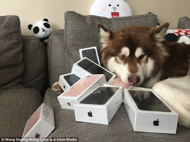 Image result for Wang Jianlin and his dog with th7iphone images