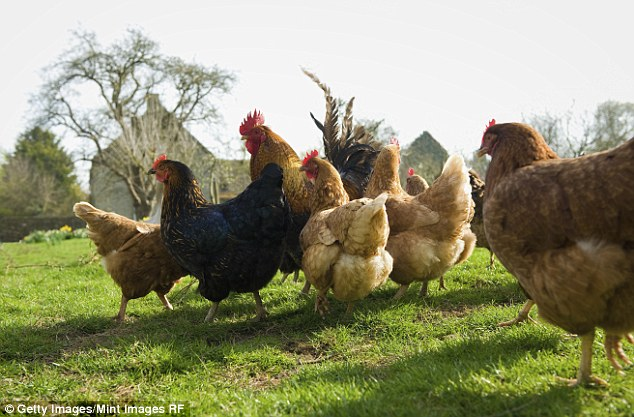 The mancommitted penetrative sex acts with chickens (stock image)