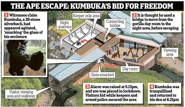 Image result for image of kumbuka
