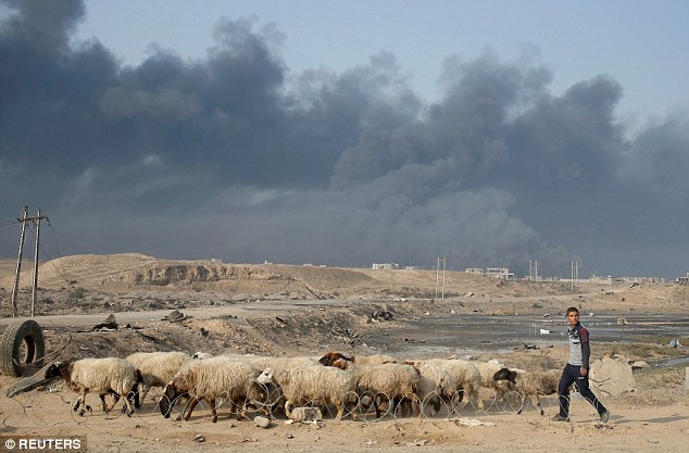 A farmer tries to move his sheep to safety as fighting rages around his farm on the outskirts of Mosul