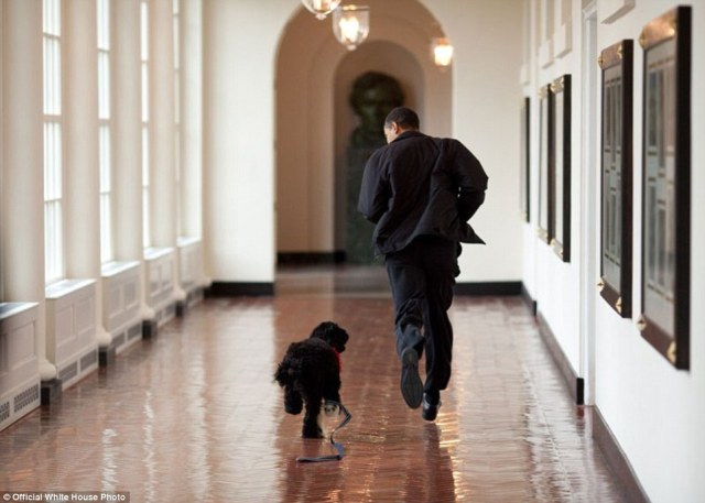 April 13, 2009. Obama runs down a corridor with the family's new dog, Bo, a six-month old portuguese water dog, in the White House in Washington, DC. Bo is a gift from Senator Ted Kennedy and his wife Victoria to the President's daughters, Sasha and Malia