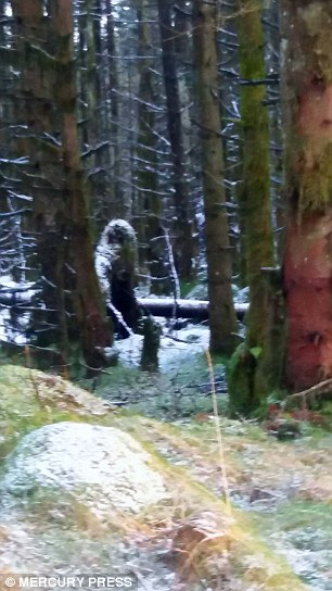 Image result for walking in woods bigfoot