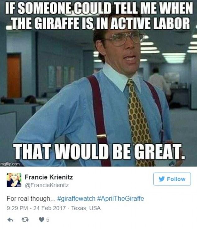 Image result for april giraffe meme active labor