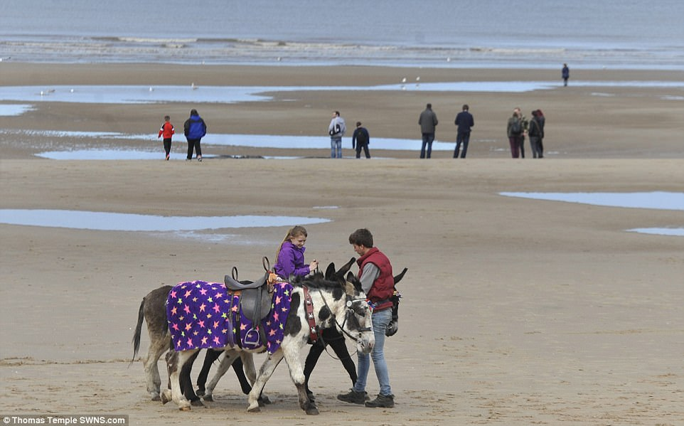 Many people flocked to Blackpool Beach in Lancashire despite gloomy skies to enjoy donkey rides on the beach, pictured