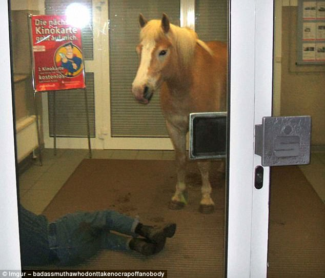 What on earth? It could be the first line of a joke - 'a horse walked into a store...' - but how does it end?