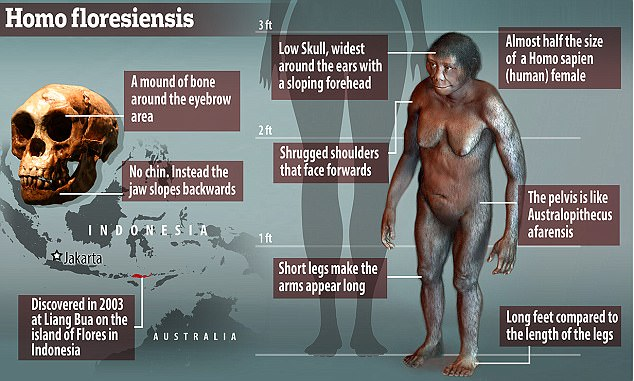 Image result for 'Hobbits' Now claimed as one of the earliest forms of the human species?