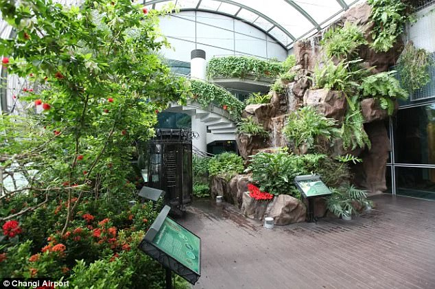 Flight of fancy: Singapore Changi Airport's butterfly garden is a perfect place to escape the hustle and bustle of the main airport