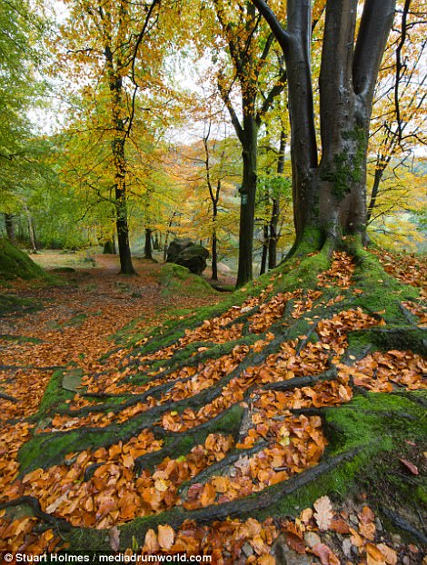 Capturing a walk through the woodland close to Clappersgate Bridge near the town of Ambleside