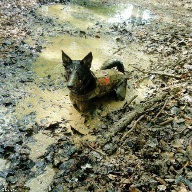 Mud bath: Despite being dressed in a little jacket, this dog still wanted to get dirty