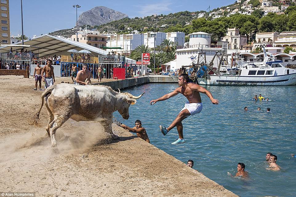 He likes to moo-ve it: 'This image - called Follow Me - was taken at Javea Port on the Costa Blanca in Spain,' said photographer Alan Humphries. 'They hold their summer festival in September and at the port they sand over an area and temporary stands are erected and some timber structures that the people can climb on to get away from the bulls. The idea is to try and get the bull to follow you into the water. If you are successful and the bull ends up in the water it is lassoed and taken back to shore. Bulls by the way are very good swimmers and sometimes they have trouble in recapturing them from the water'