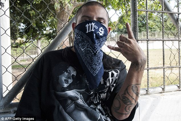 MS-13, or the Mara Salvatrucha, is believed by federal prosecutors to have thousands of members across the US, primarily immigrants from Central America. An MS-13 member is seen above in this 2013 file photo in El Salvador