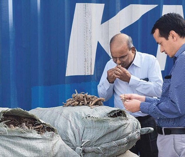 Authorities In Mumbai Have Seized A Whopping Kg Of A Protected Himalayan Herb