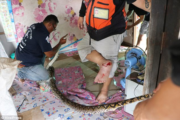 Rescue worker Danu Pon, 40, was bitten by the monster and blood began streaming from his foot