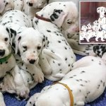 Dalmation Breaks Record For Largest Litter With 18 Puppies Daily Mail Online
