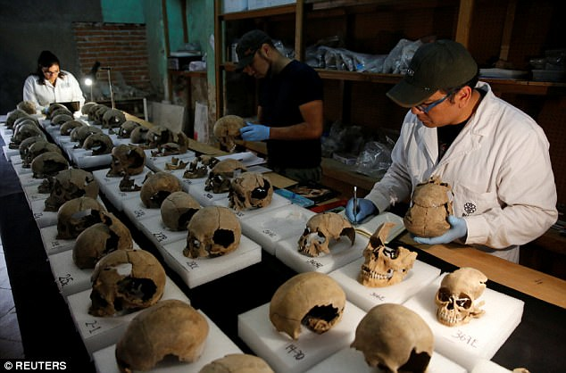 Abel Guzman, Rodrigo Bolanos and Miriam Castaneda from the National Institute of Anthropology and History (INAH) examine skulls at a site where more than 650 of them were found