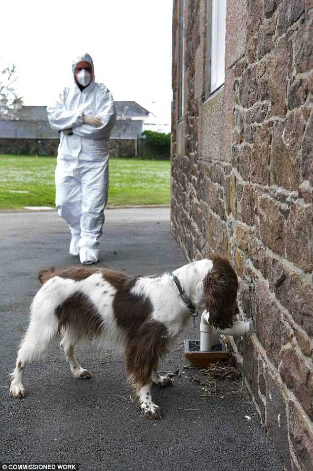 A forensics officer and police dog search the exterior of Haut de la Garenne