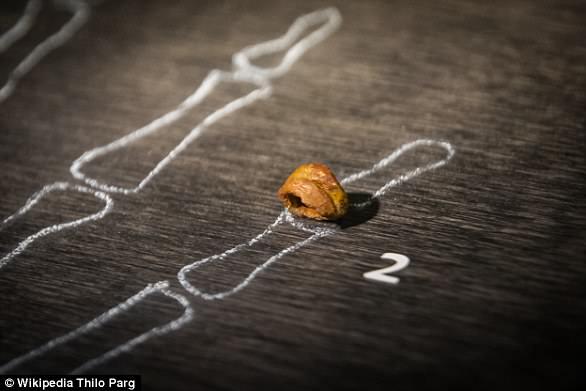 El análisis de ADN de un fragmento de hueso de dedo meñique en 2010, (en la foto) que pertenecía a una niña, reveló que los denisovanos eran una especie relacionada, pero diferente de, los neandertales.