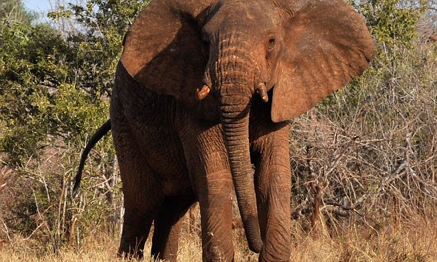 Argentinian hunter is crushed to death by an elephant