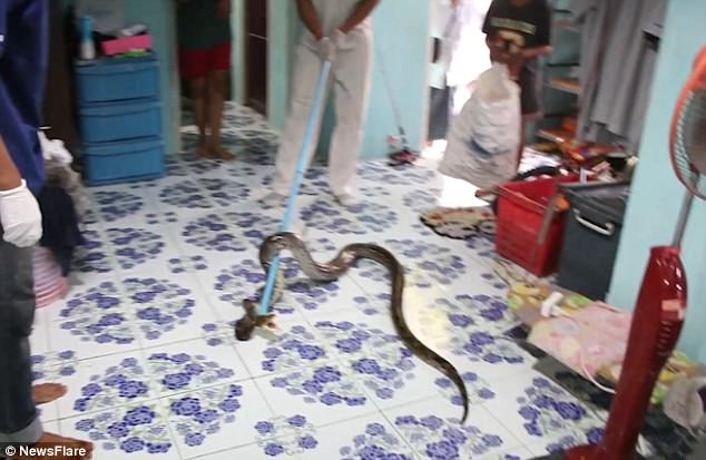 Mr Boonmee from the Chachoengsao Voluntary Rescue spent 15 minutes using a pole and lasso to catch the snake before it bit his hand as he battled to subdue it outside the room
