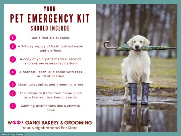 A Florida pet store released this graphic, explaining what pet owners need to do in the event of an hurricane