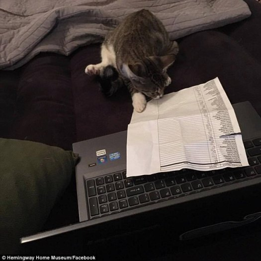 'As our staff member, Nicole Navarro was confirming all cats were accounted for, the cat Grace Kelly (pictured) took over roll call,' staff members wrote on the home's Facebook page Saturday night