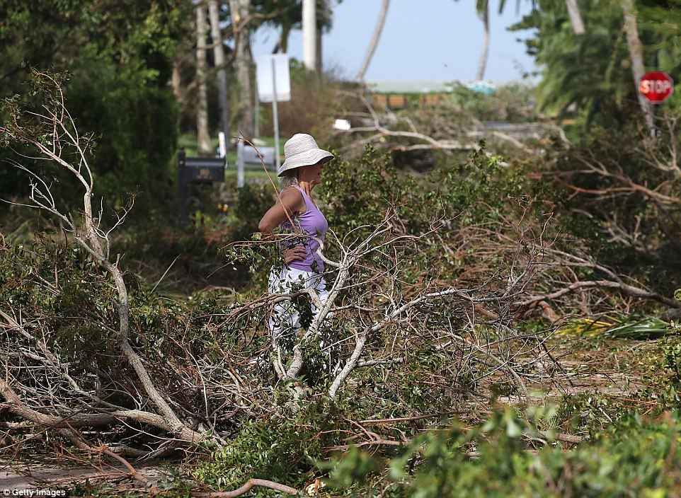 A woman walks past trees downed by the winds of Hurricane Irma on September 11, 2017 in Naples, Florida