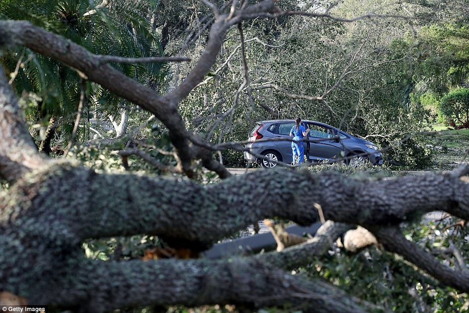 A women stands near trees downed by Hurricane Irma on September 11, 2017 in Bonita Springs, Florida