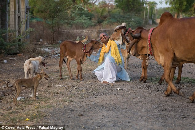 Vijay Parsana, 44, pictured with two-month-old calf Saraswati and her mother Poonam, a cow, at his ashram