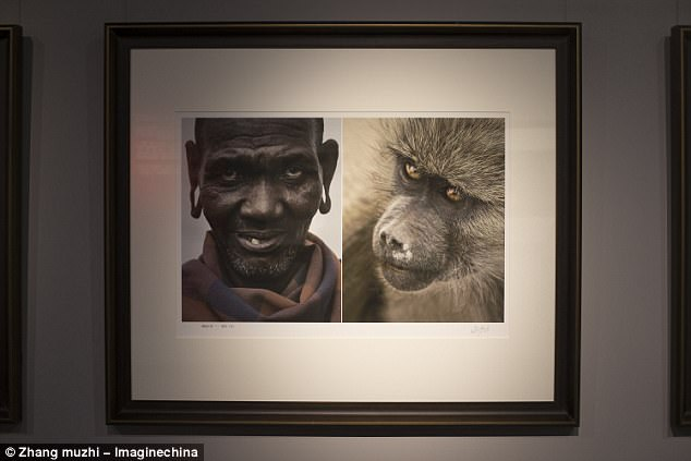 Image result for chinese museum compare africa with animals
