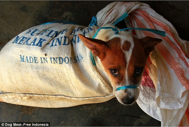 Cruel: The animals are thrown into plastic burlap sacks or bags and bound with string