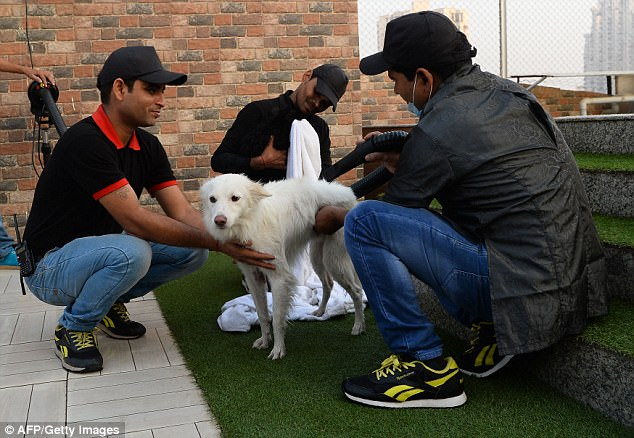 After enjoying his swim, the staff then use a hair dryer to dry off the dog's coat before he goes back into the hotel