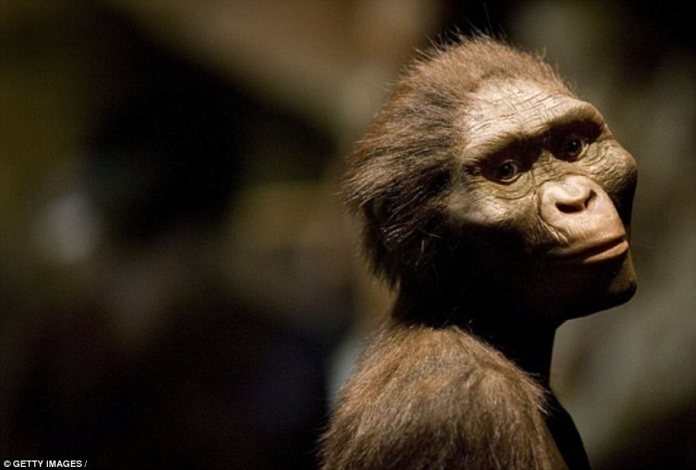 Little Foot roamed the Earth at around the same time as the famed 3.2-million-year-old Lucy, an Australopithecus afarensis - shown in a reconstruction