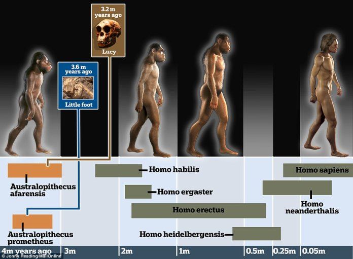 Little Foot, of the Hominid species Australopithecus prometheus, roamed the plains of Africa around 3.6 million years ago, while Lucy, another early human ancestor, lived on the continent 3.2 million years ago. Modern humans wouldn't evolve for at least another 3 million years