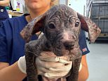 This abandoned ten-week-old pet, named Eleven, modified into came across in woodland in Stockton-on-Tees, ravenous and thirsty and along with her skin covered in scabs and sores