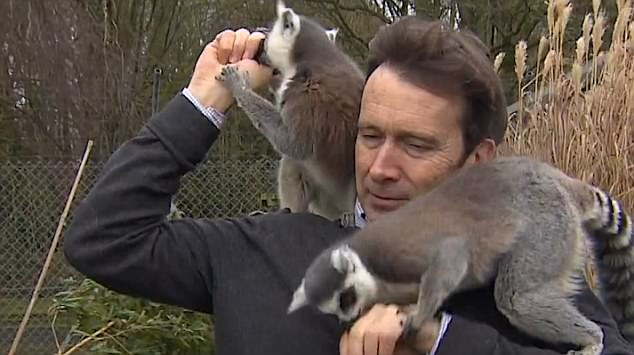 Alex Dunlop was trying to film a report at Banham Zoo in Norfolk but found himself unable to evade the attentions of the eager lemurs