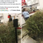 Woman Returns Christmas Tree In Jan After It Died Daily Mail Online