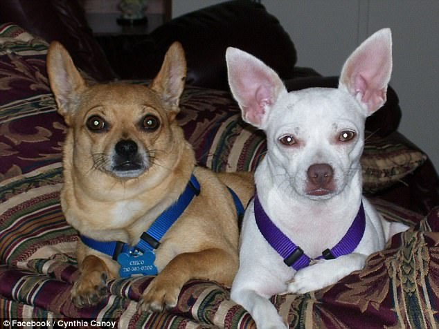 These two dogs were also inside the car that Howland Jr. burned with Canoy's body inside
