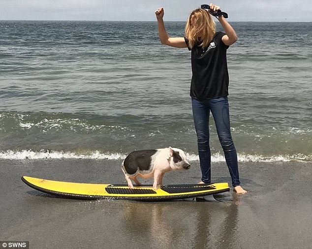 Talented: Maddie, from San Francisco, California, believes he's so good at the challenging sport of surfing as a result of his low center of gravity, which helps him balance