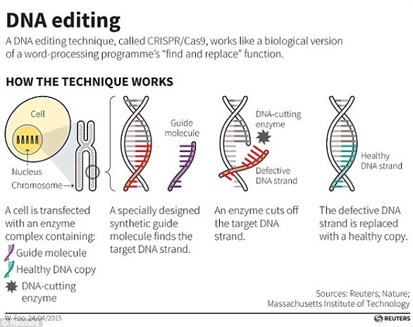 Die CRISPR / Cas9-Technik verwendet Markierungen, die den Ort der Mutation identifizieren, und ein Enzym, das als winzige Schere fungiert, um die DNA an einer genauen Stelle zu schneiden, so dass kleine Teile eines Gens entfernt werden können
