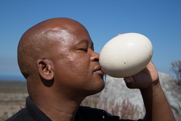 There are even predictions of an exodus of families used to living in a fully-functioning city – and claims that this disaster is the first urban equivalent of droughts that before now only blighted rural parts of this continent (bushman Karson Pafre Jackson drinks water stored in an ostrich egg)