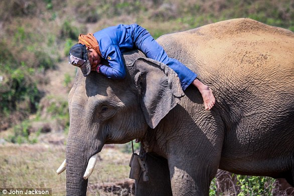 A new study has found that like humans, elephants also have different personalities.  They can be aggressive, observant and outgoing.  In the picture is an elephant with a mahout or rider, who works with the animal every day in Myanmar's lumber industry