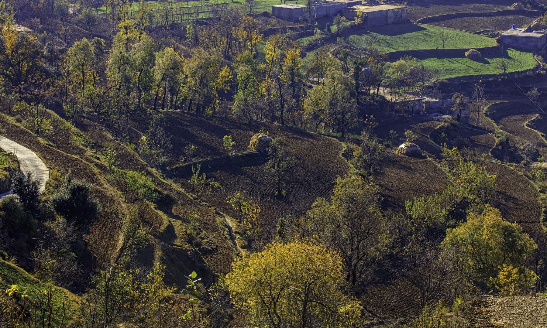 A village in Matta.