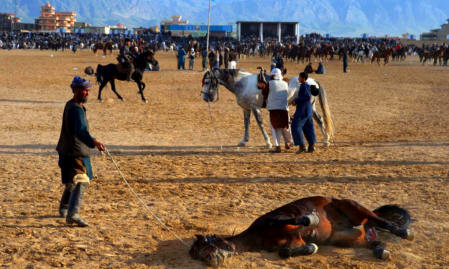 A horse rolls in the dust as others are prepared to take part in a buzkashi match. ─ AFP