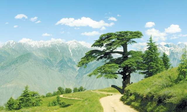 The magnificent 300-year-old Deodar Cedar tree, dubbed Chaghbini by the locals, is located on the main track of the park.