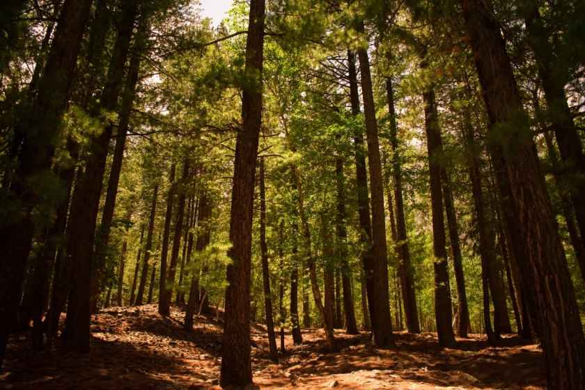 Naltar's valley floor is covered by lush green forests